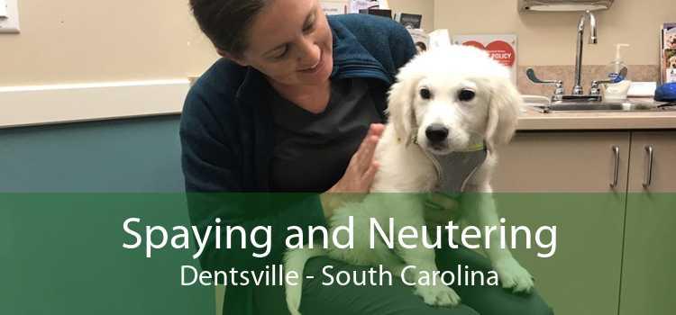Spaying and Neutering Dentsville - South Carolina