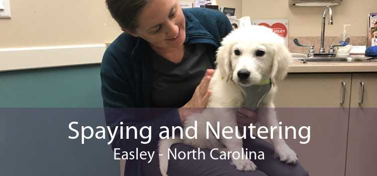 Spaying and Neutering Easley - North Carolina