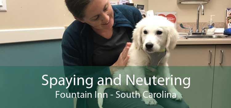 Spaying and Neutering Fountain Inn - South Carolina