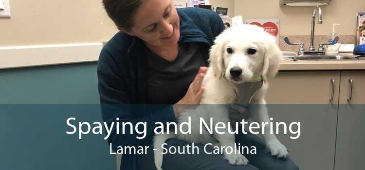 Spaying and Neutering Lamar - South Carolina