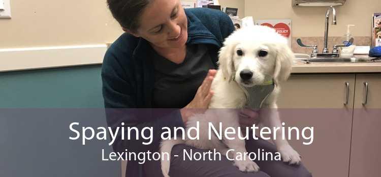 Spaying and Neutering Lexington - North Carolina