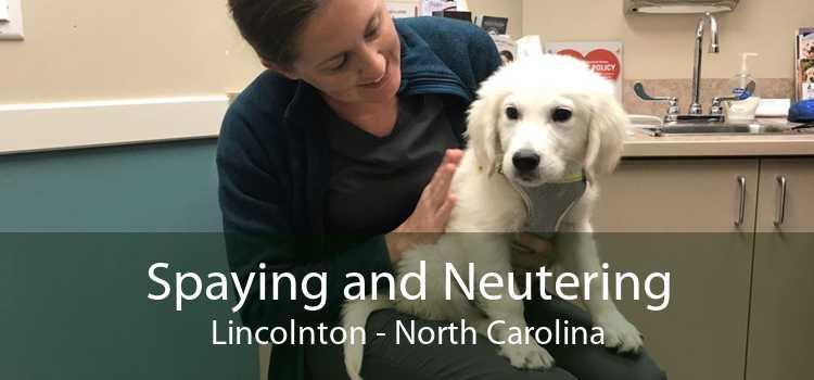Spaying and Neutering Lincolnton - North Carolina