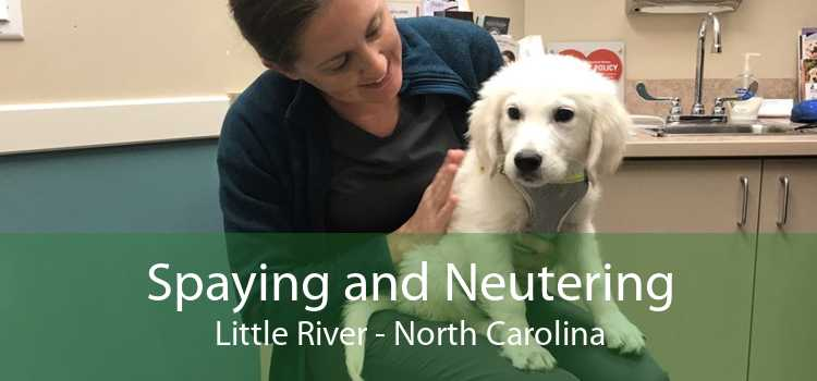 Spaying and Neutering Little River - North Carolina