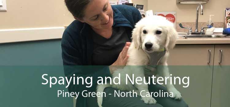 Spaying and Neutering Piney Green - North Carolina