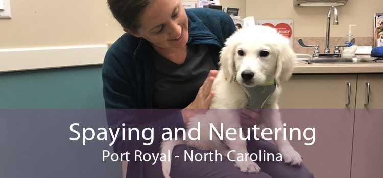 Spaying and Neutering Port Royal - North Carolina