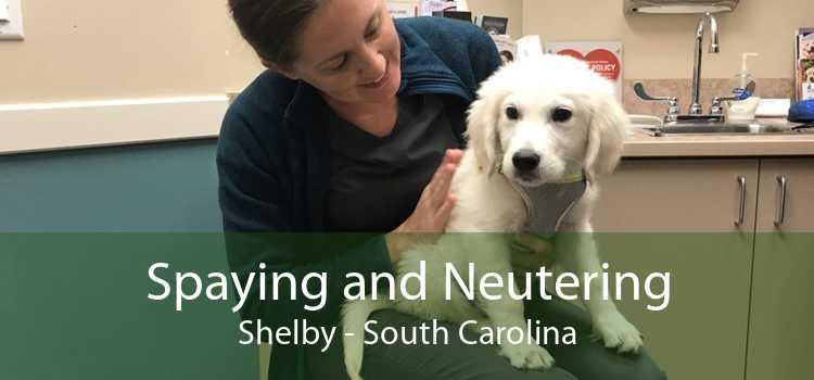 Spaying and Neutering Shelby - South Carolina