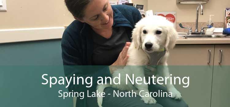 Spaying and Neutering Spring Lake - North Carolina