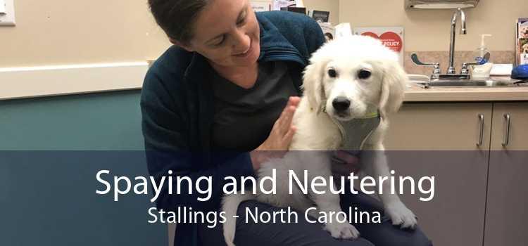 Spaying and Neutering Stallings - North Carolina