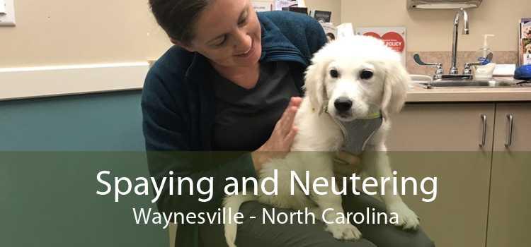 Spaying and Neutering Waynesville - North Carolina
