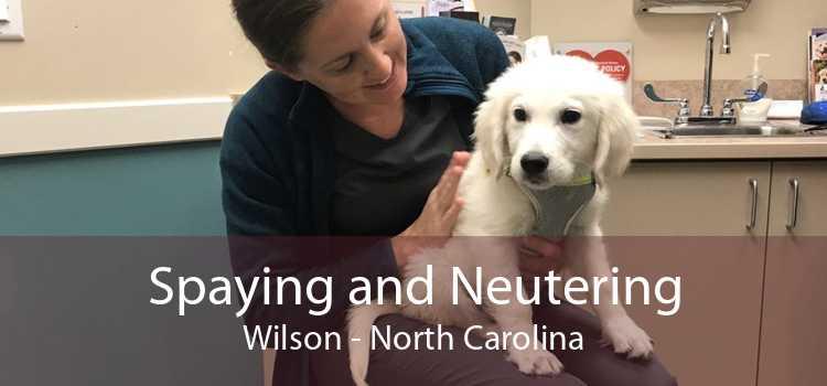 Spaying and Neutering Wilson - North Carolina