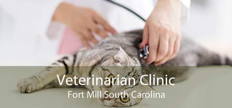 Veterinarian Clinic Fort Mill South Carolina
