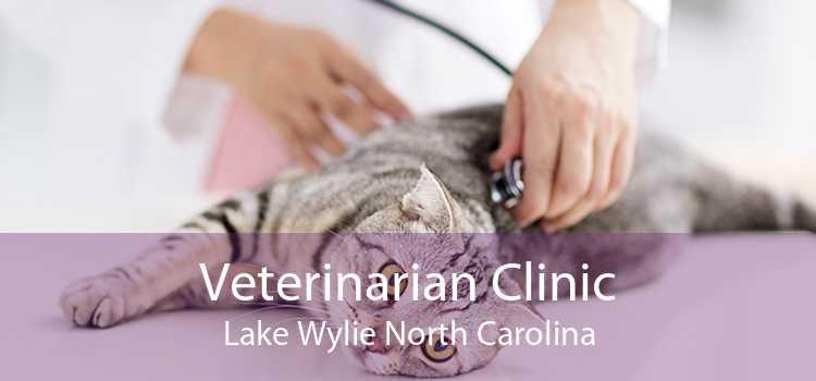 Veterinarian Clinic Lake Wylie North Carolina