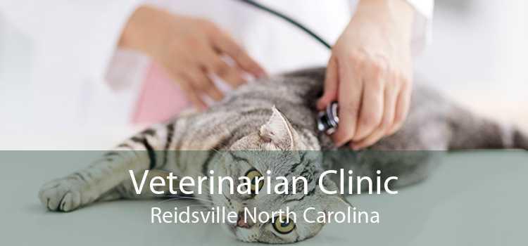 Veterinarian Clinic Reidsville North Carolina