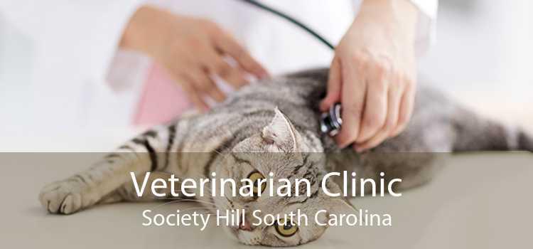 Veterinarian Clinic Society Hill South Carolina