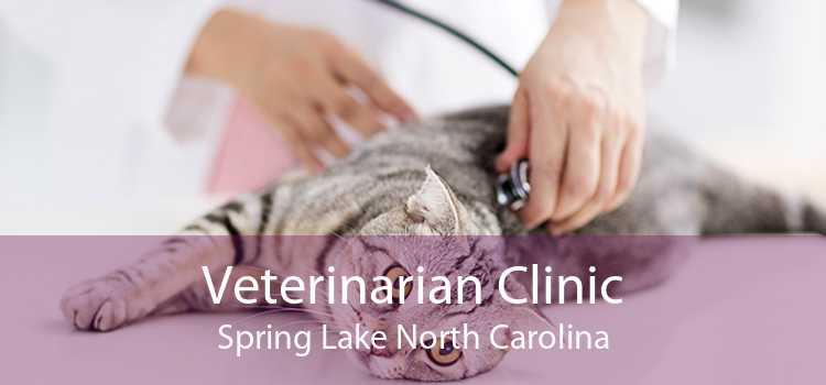 Veterinarian Clinic Spring Lake North Carolina